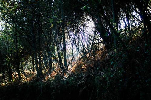 Salina - île éolienne - la barrière de fougères de la fossa delle felci