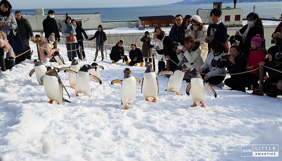 Penguin Walk at Otaru Aquarium