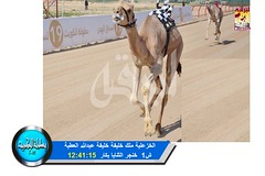 📷 صور سباق الثنايا والحيل والزمول (الأشواط العامة) ختامي الكويت مساء 12-2-2019