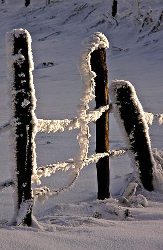 La clôture givrée