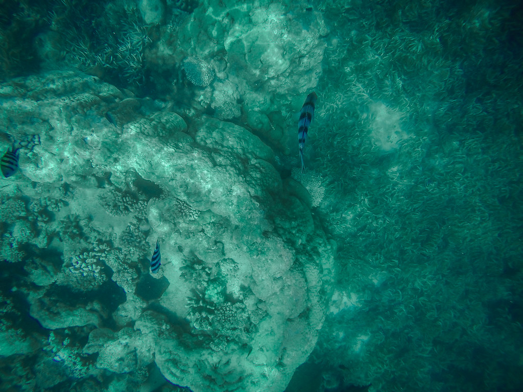 Blue Safari, Zanzibar