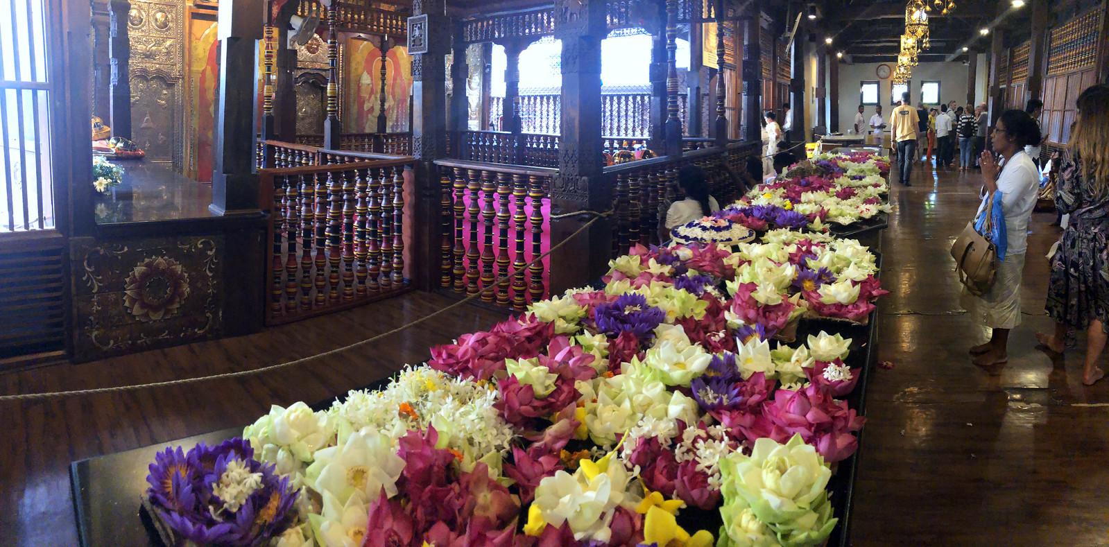 Kandy en un día, Sri Lanka kandy en un día - 47013342842 6839a30eab h - Kandy en un día, Sri Lanka
