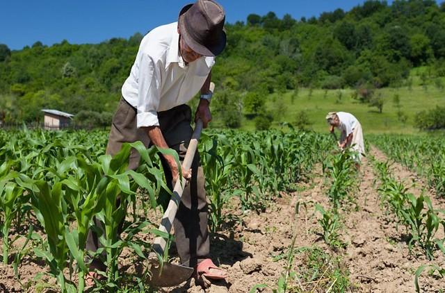 Resultado de imagem para fotos de agricultores trabalhando no campo