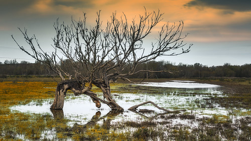 Swamp and dead tree.