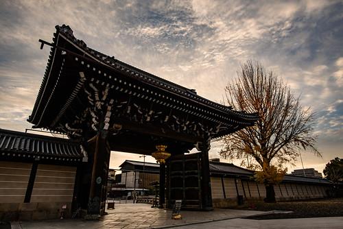 japan kyoto 京都府 西本願寺 寺院 temple 世界遺産 worldheritage 紅葉 autumnleaves イチョウ 日の出 sunrise