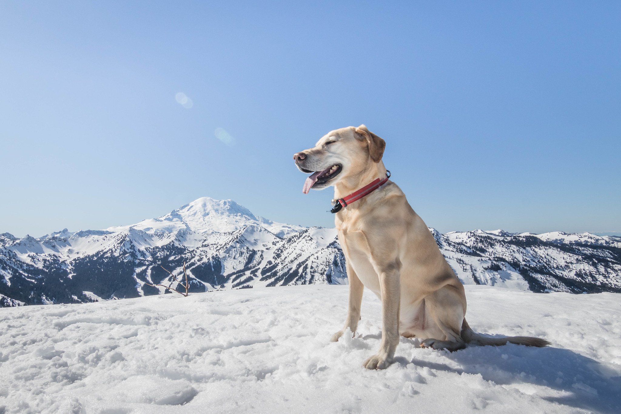 Summit dogs on Platinum Peak