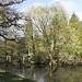 20 March 2019, - Thorp Perrow Arboretum