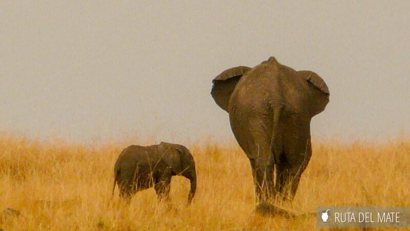 Animales hacer un safari P1140397