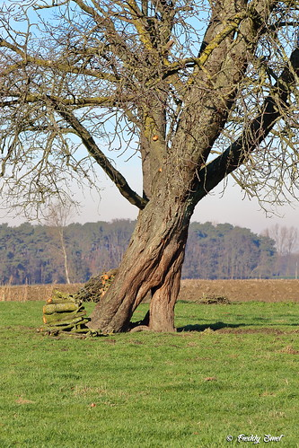 Tree in motion?