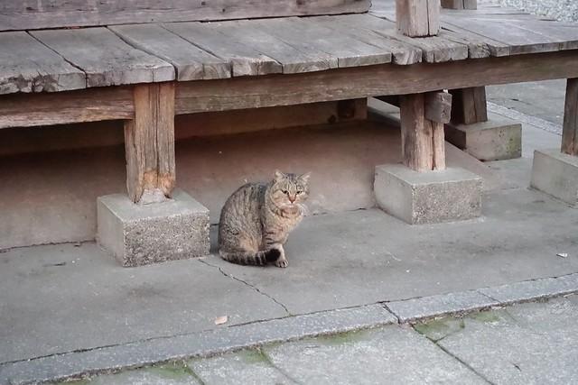 Today's Cat@2019-02-14