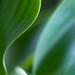 Green, 2.10.15