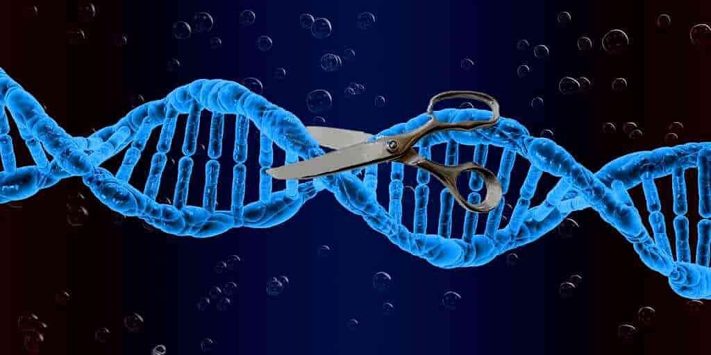 CRISPR-casX-nouvel-éditeur-de-gènes-plus-petit