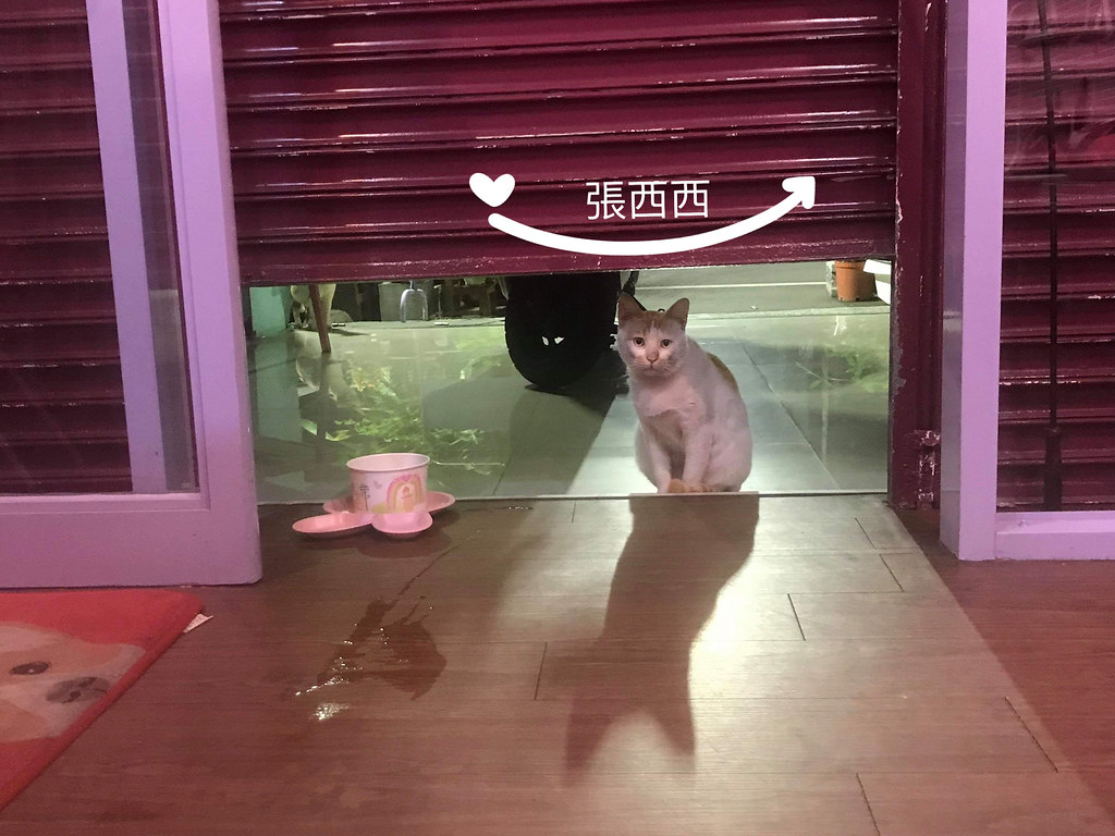 張西西 @陳小可的吃喝玩樂