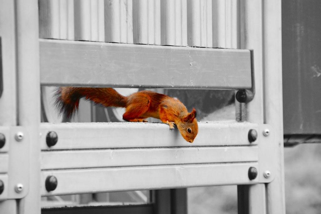 orava-muokattu