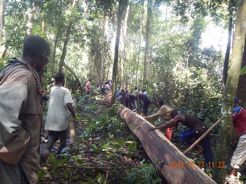 Guiding beam out of forest to path