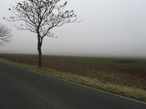 20110316 0203 132 Jakobus Straße Feld Baum Nebel