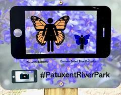 Take A Butterfly Selfie