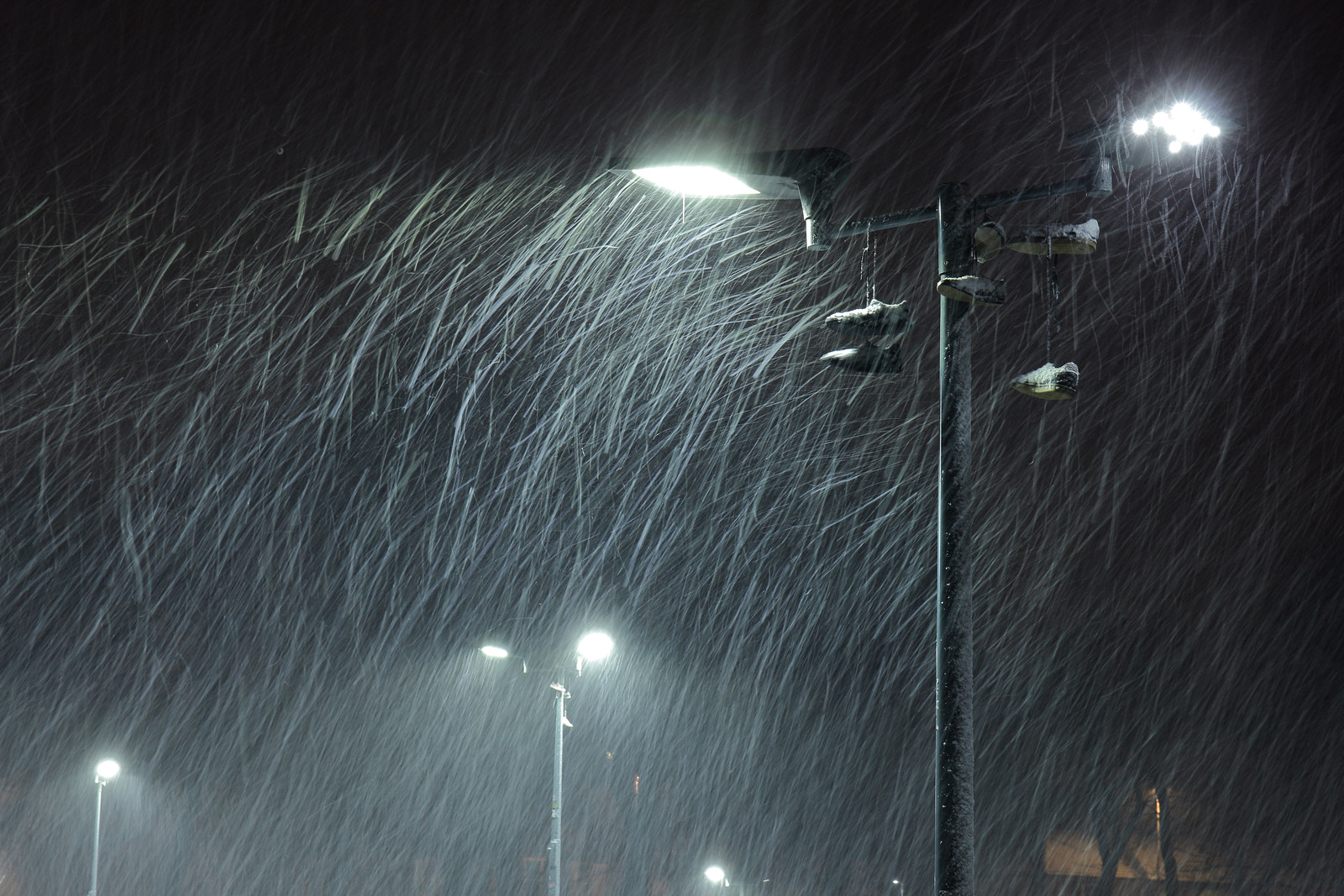 Blizzard caught in floodlights