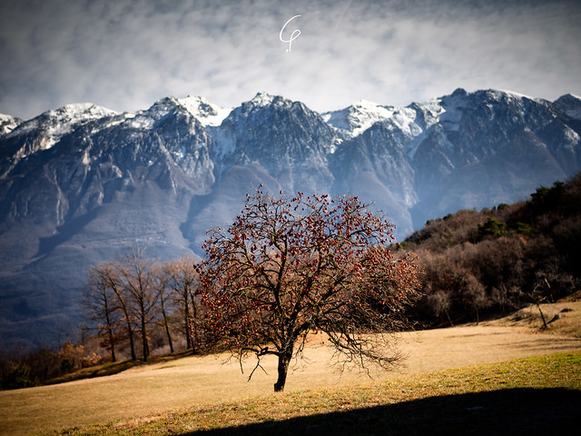 The Tree And The Mountain...