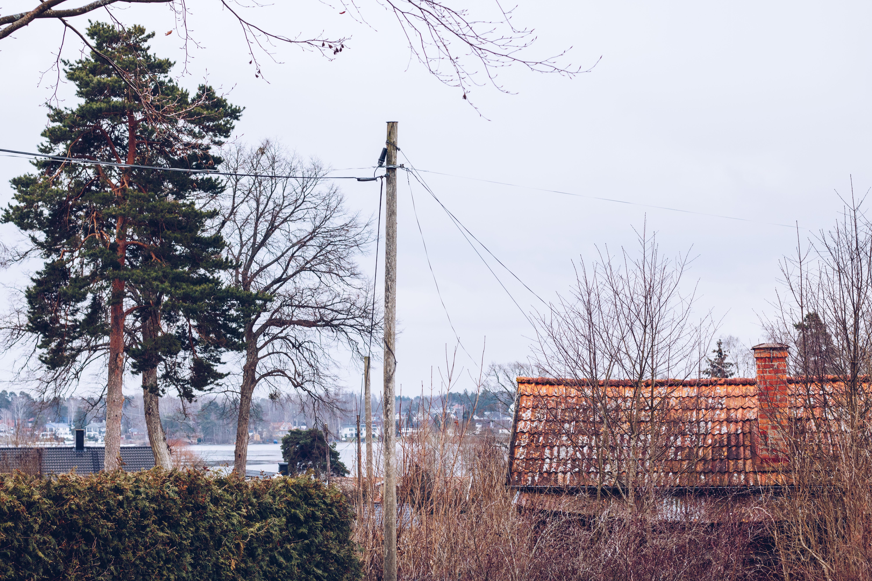 Vårvinter - reaktionista.se