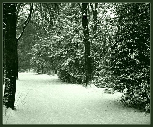 Winter at last !