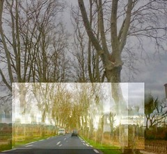 Tree-lined Lane of Occitania - Photo of Tourbes