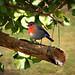 Comida para pájaros by albertnavasosete