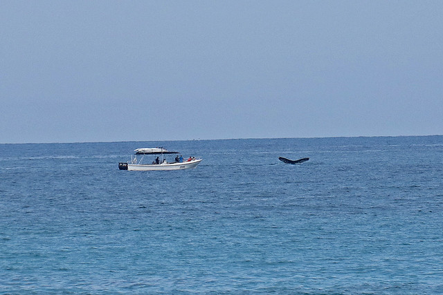 Bahia de Banderas Whales, Canon EOS 80D, Canon EF-S 18-200mm f/3.5-5.6 IS