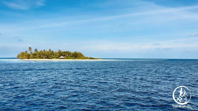アリ環礁の南エリアを何度も行ったり来たりしてジンベエ出るのを待ってると突然アスラムが叫ぶ!「ジンベエ!!!」