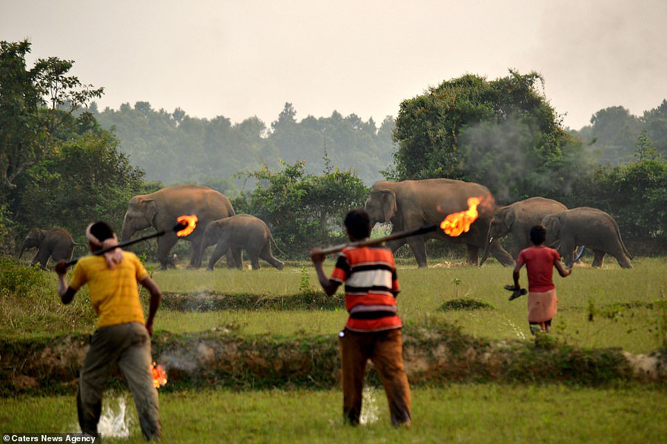 Aldeanos-arrojan-bombas-a-elefantes