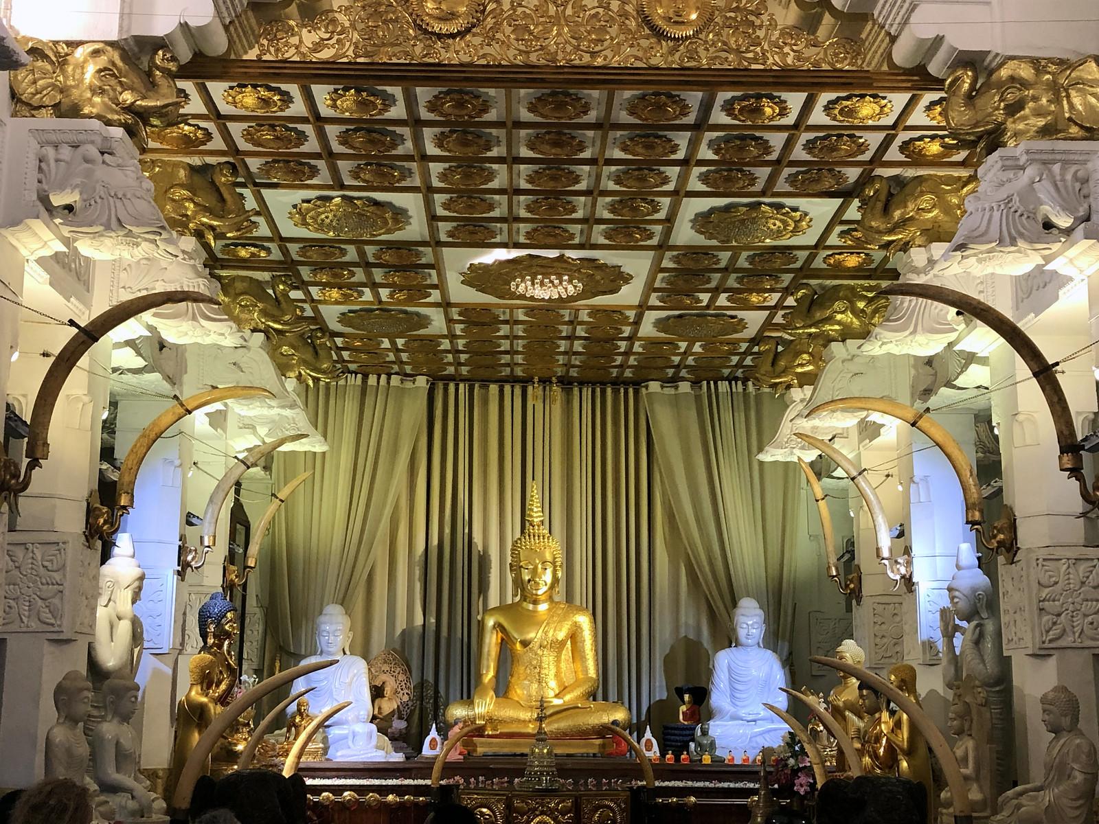 Kandy en un día, Sri Lanka kandy en un día - 47013341202 291a2def4f h - Kandy en un día, Sri Lanka
