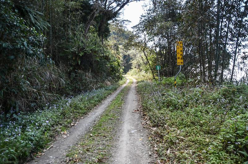 小關山林道 4