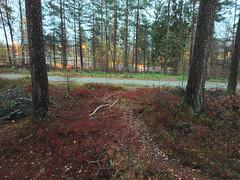 Trær og Stein, Prestegårdsskogen, Askim, Østfold, Norway