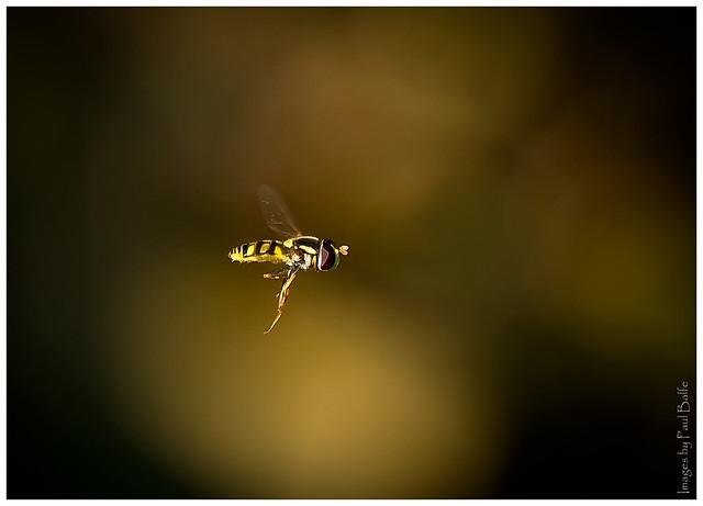 Hangin' in there, Nikon D5, AF-S Nikkor 300mm f/4E PF ED VR