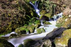 Petit torrent des Pyrénées
