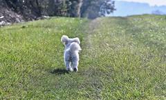 I'm a poor lonesome clébard/Je suis un pauvre chien solitaire... Press L please