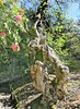 Botanical Garden interestng tree trunk