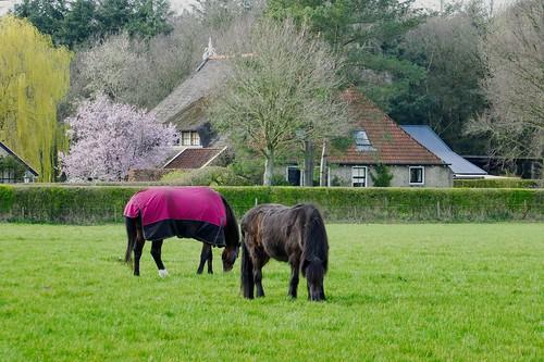 Kleine boerderij