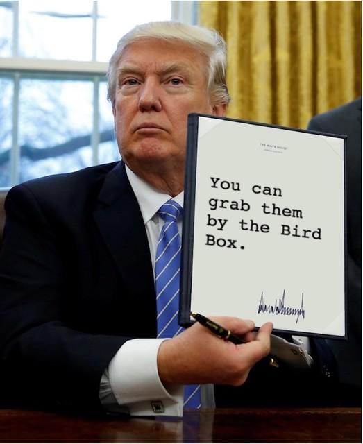Trump_birdbox