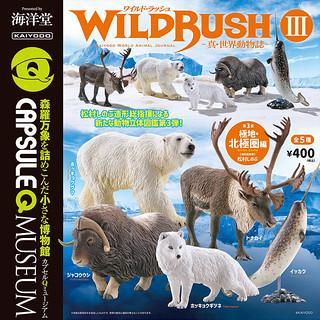 【官圖&販售資訊更新】膠囊Q角色集《WILD RUSH 真.世界動物誌》第三彈「極地・北極圏編」!カプセルQミュージアム WILDRUSH 真・世界動物誌第3弾「極地・北極圏」編