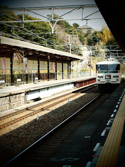 kawazuzakura_13