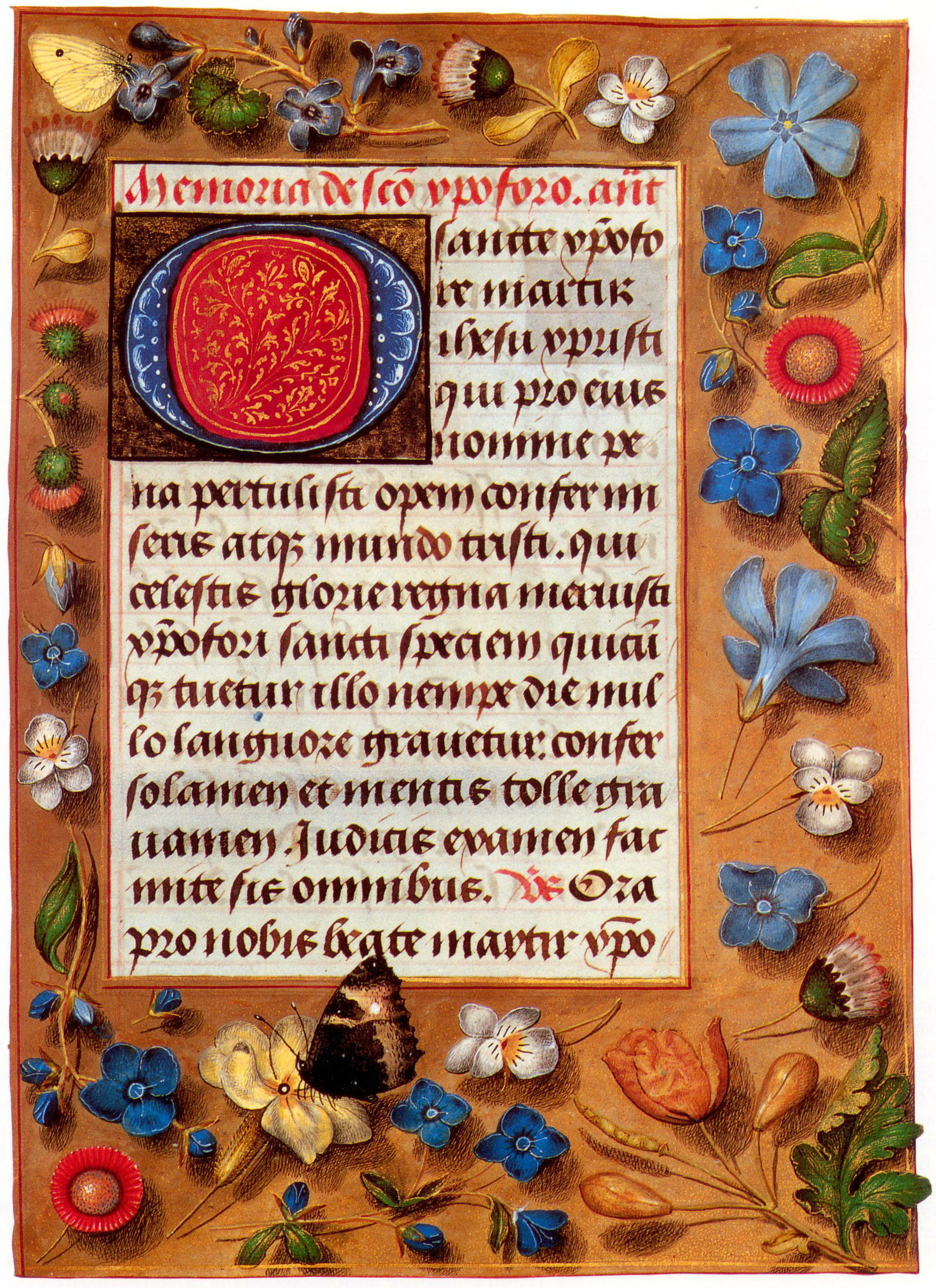 The lavish illusionistic borders of this Flemish book of hours from the late 1470s are typical of luxury books of this period, which were now often decorated on every page. The butterfly wing cutting into the text area is an example of playing with visual conventions, typical of the period. Among the plants are the Veronica, Vinca, Viola tricolor, Bellis perennis, and Chelidonium majus. The butterfly is Aglais urticae. The Latin text is a devotion to Saint Christopher.
