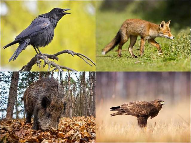 WWF corso riconoscimento fauna selvatica