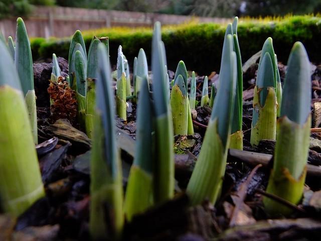 Dreaming of Spring, Fujifilm FinePix HS50EXR