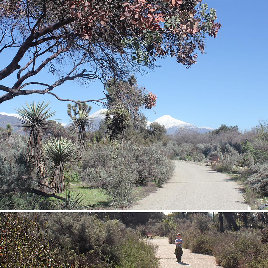 Rancho-Santa-Ana-Botanical-Gardens-Walk-10