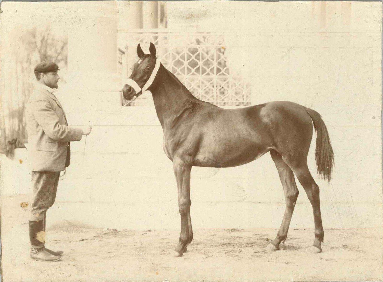 Новгород. Портрет неизвестного с лошадью