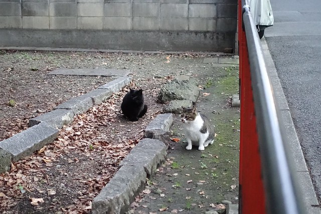 Today's Cat@2019-01-01
