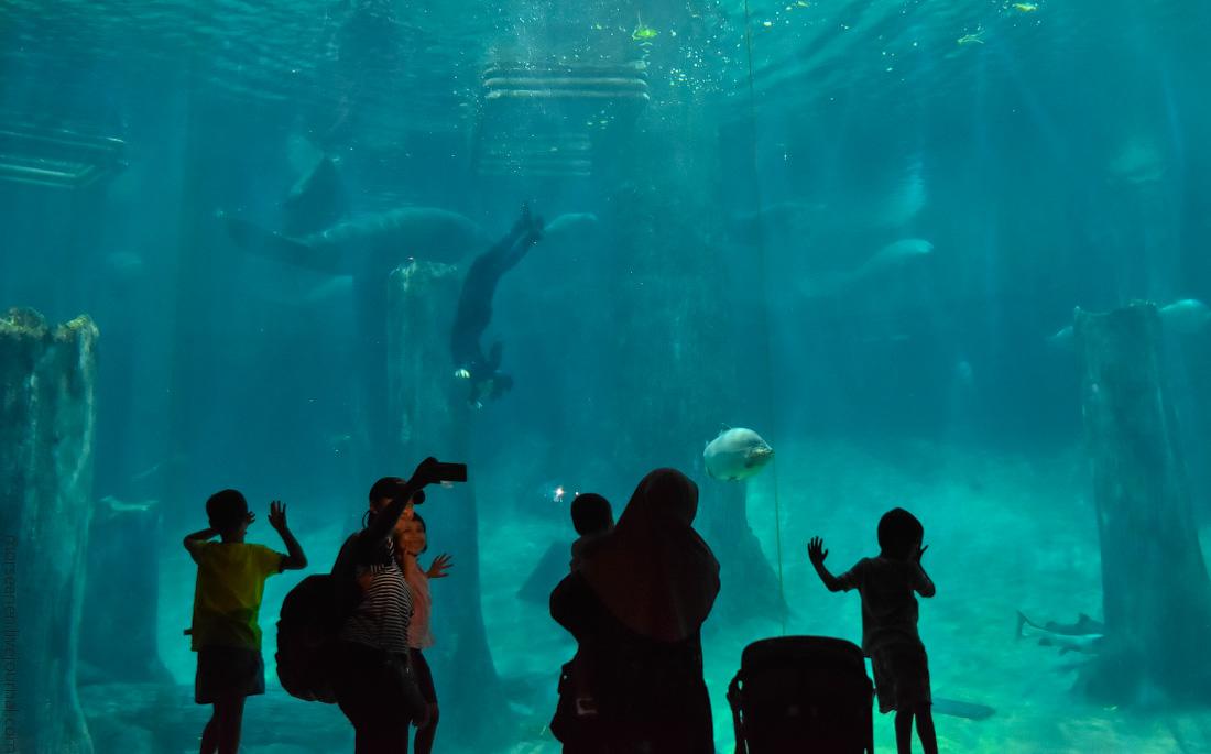 Singapore-zoo-(56)