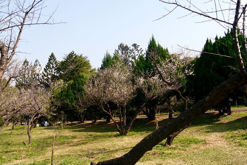 清華大學梅園