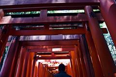 Walking Through Fushimi Inari-taisha